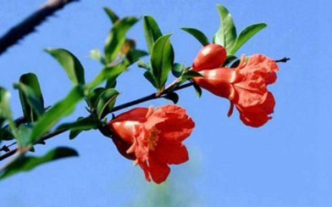 农历三月出生要几月怀孕,12生肖农历三月出生的人命运