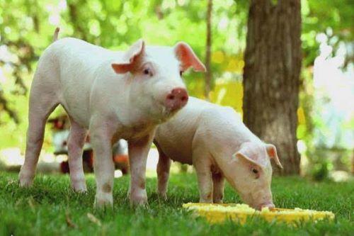 """3年属猪的37岁需注意什么,整体运势如何"""""""