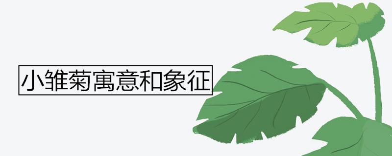 小雏菊寓意和象征