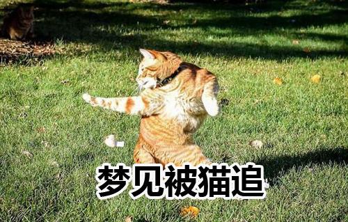 做梦梦见被猫追什么意思 是好兆头吗