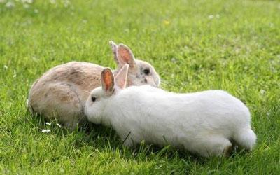 属兔人出生月的命运怎么样