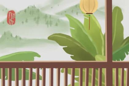 风水说为什么绿萝招鬼