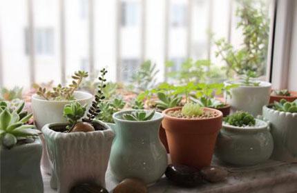 风水上来说多肉植物可以养在卧室吗