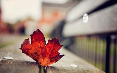 秋分气温一般多少度?2020年秋分后一天订婚行吗?