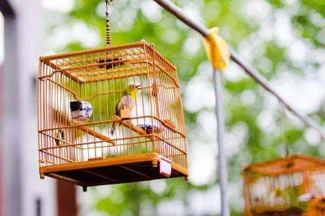 养鸟应该如何选择?养鸟禁忌有哪些?