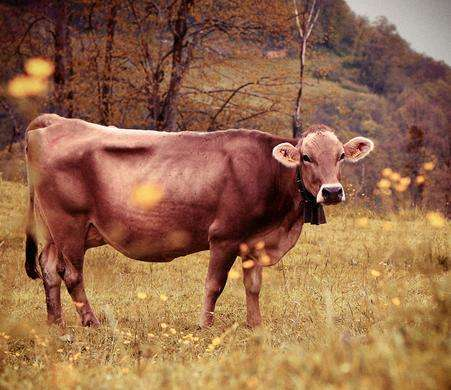 属牛最佳配偶的属相是什么?