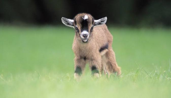 属羊人的婚姻与命运是怎样的?