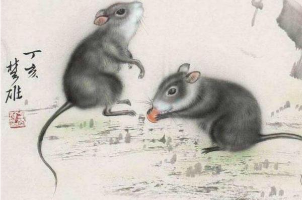 属鼠的人今日运势查询-安心网