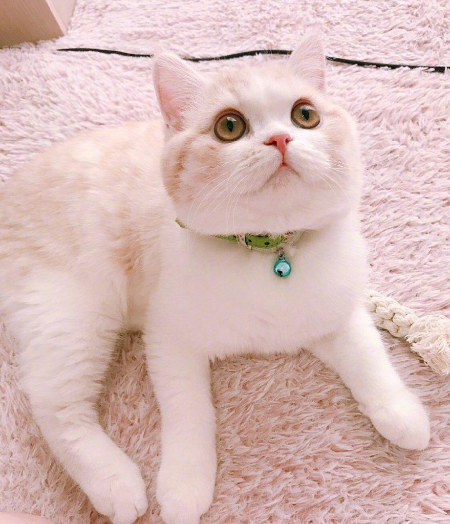 一只陌生猫跑家里预示什么