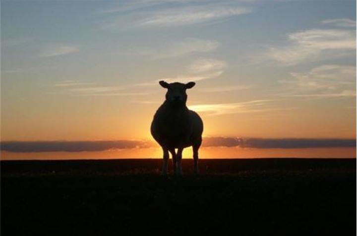 """1年属羊女命太苦了容易守寡是因为什么"""""""